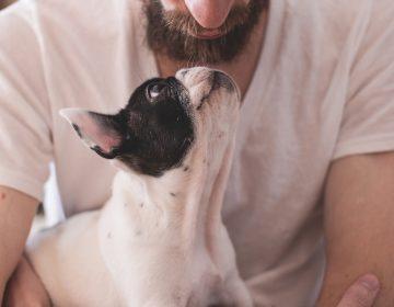 Animais em apartamentos: como funciona a lei e cuidados necessários
